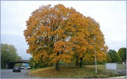 """<font color=""""red""""><font size=""""+1"""">Couleurs d automne... 2015..... Spectacle automnal avec de beaux contrastes et de belles couleurs</font></font>"""
