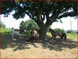 """<font color=""""blue""""><font size=""""+1""""> Paysage campagnard chevaux et ânes à Vivegnis </font></font>"""